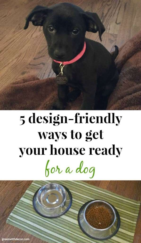 All the dog stuff doesn't have to get in the way of a nice-looking house! 5 design-friendly ways to get your house ready for a dog | Green With Decor