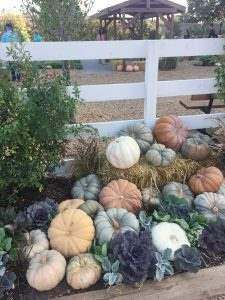 Our trip to Magnolia Market, fall decorating in the garden.