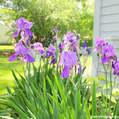 Fun patio decorating and landscaping ideas! I love all the patio furniture they have! What a great outside entertaining space.