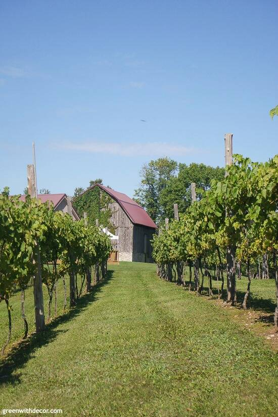 Wineries in Door County – vineyard and barn at Simon Creek Vineyard & Winery